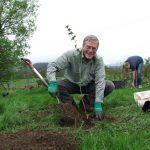 planting hazel trees